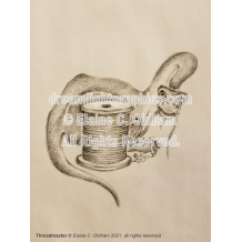 Threadmaster mini print of pencil drawing by Elaine C. Oldham
